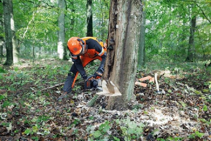 Нормы и правила удаления деревьев в Московской области