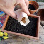 Как выбрать качественные семена для посадок?