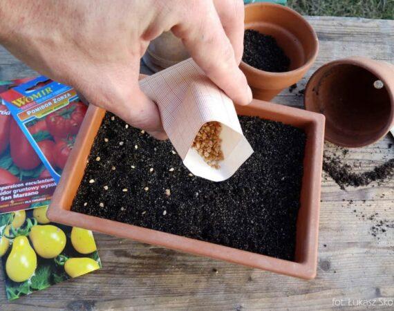 Выбор семян растений для посадки