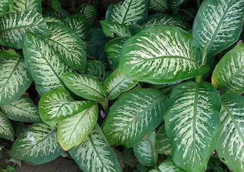 Justin Stebbing tips: which plants are dangerous to keep at home?